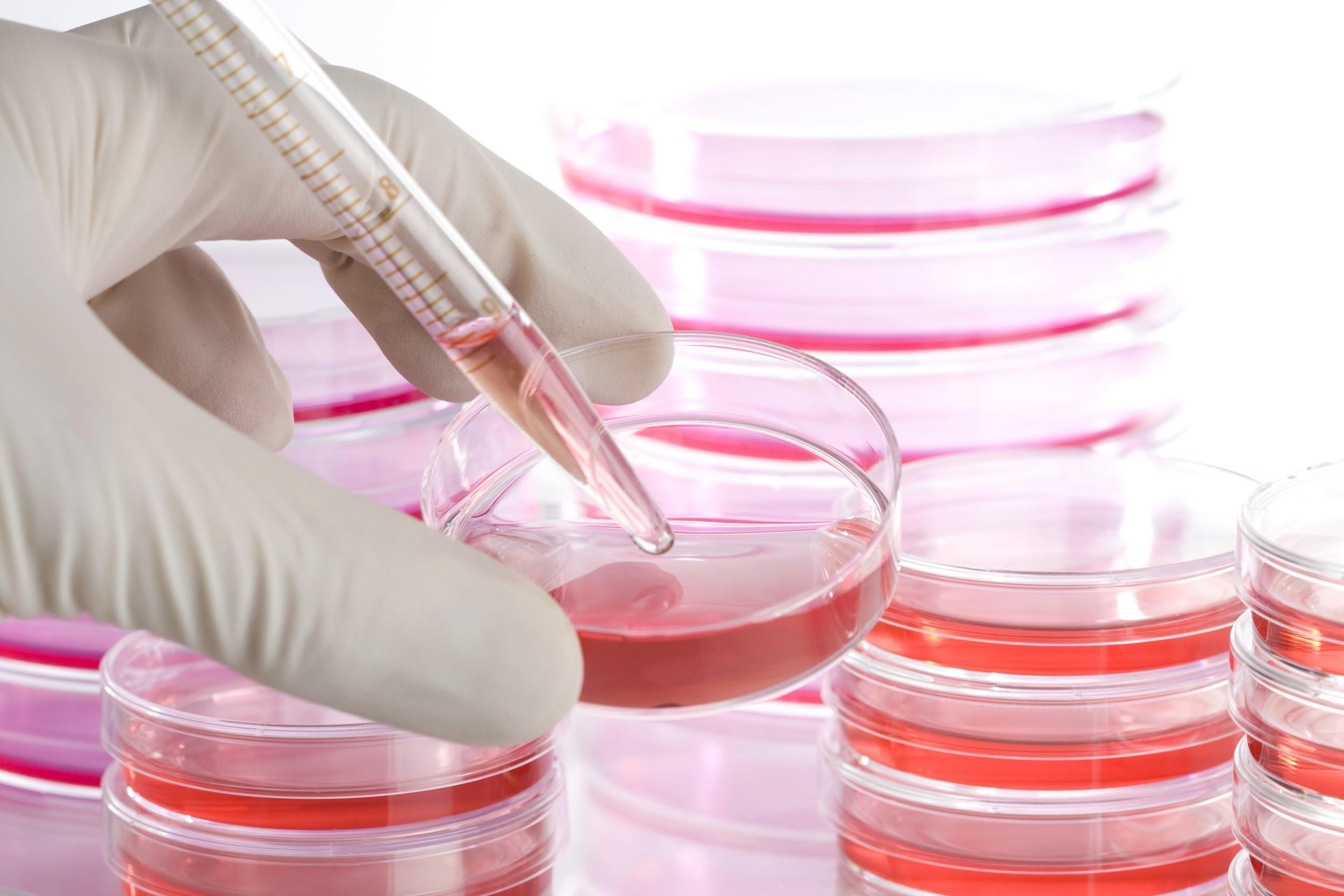 Biologie cellulaire et développement